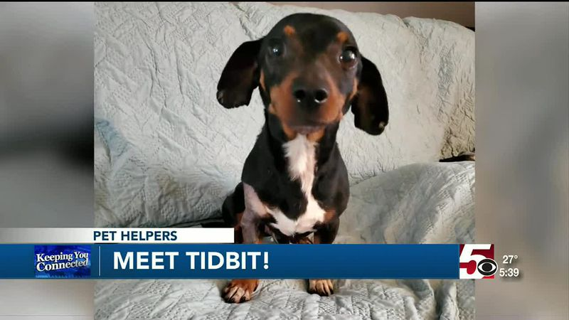 Pet Helpers: Tidbit