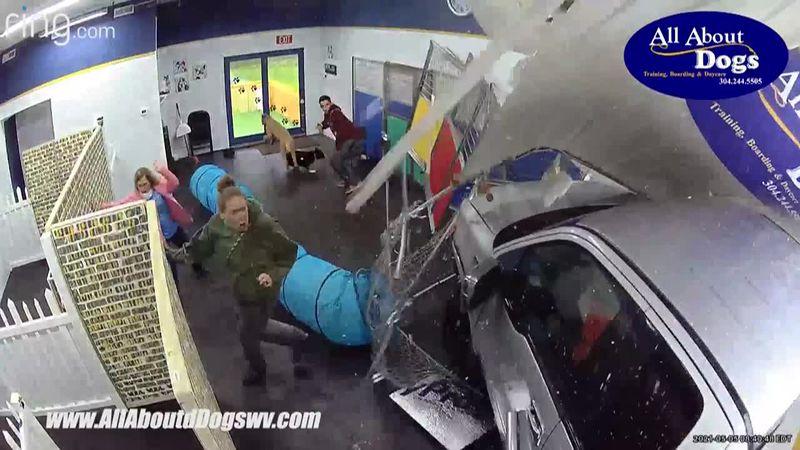 Doggie Daycare Crash