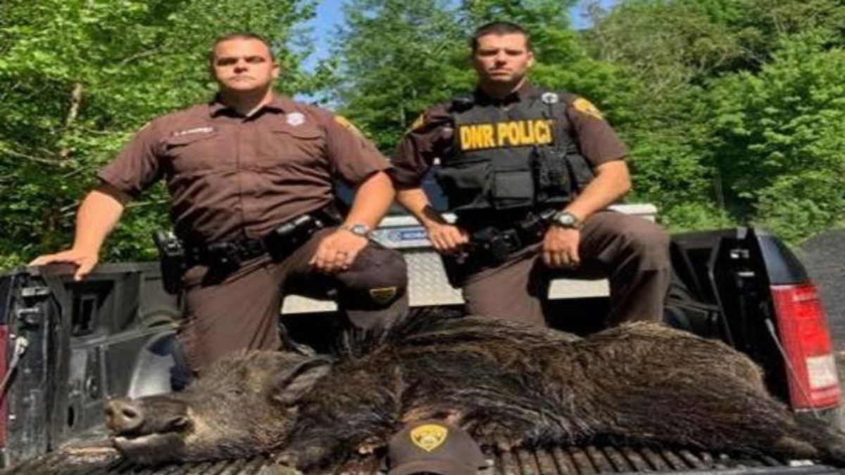 A wild boar was illegally killed in southern West Virginia, and four people face charges, investigators say.