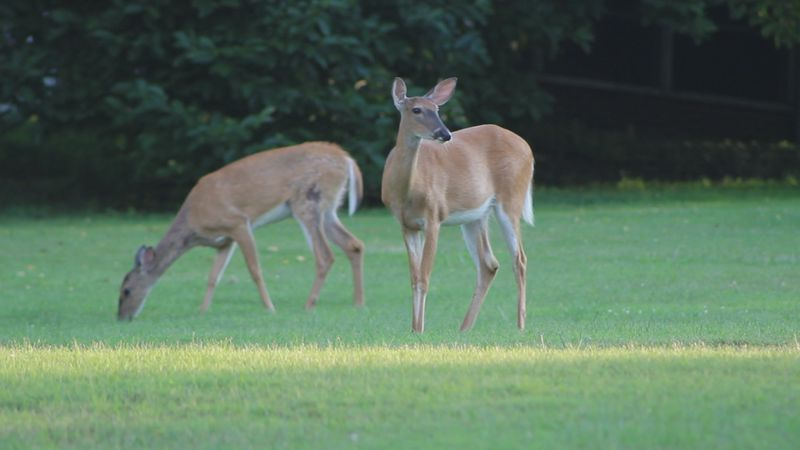 West Virginia Division of Natural Resources predicts a promising season for hunters.