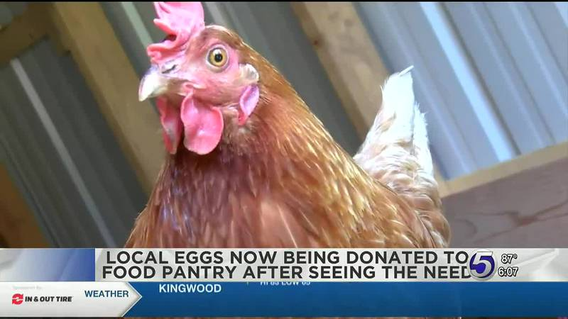 Lewis County man donates chicken eggs to food pantry after seeing need