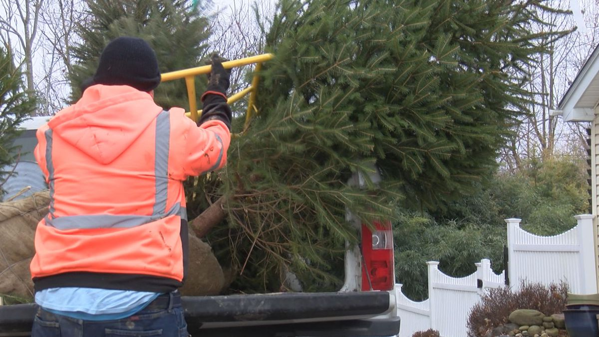 An employee with the MCPARC is dropping off a tree in Fairmont for its scheduled delivery.