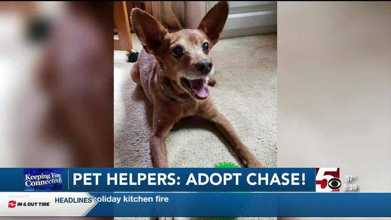 Pet Helpers: adopt Chase!