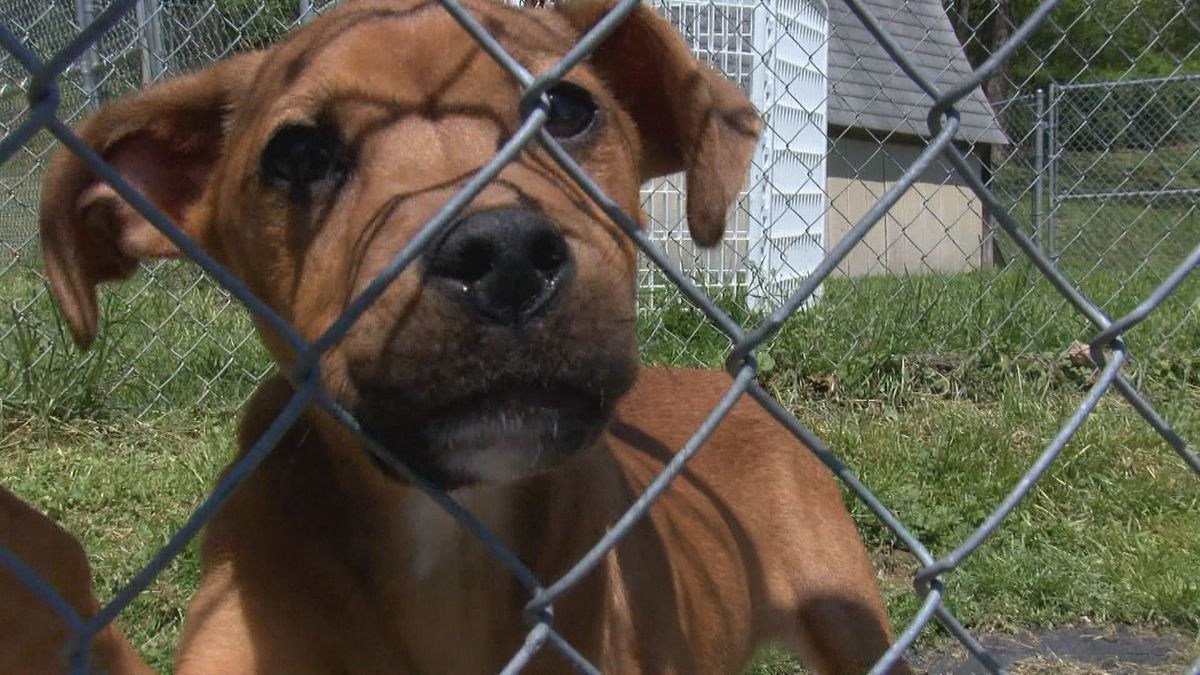Marion County Humane Society Identifies Possible New Kennel Location