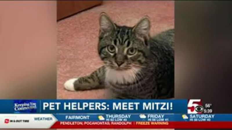 Pet Helpers: Mitzi