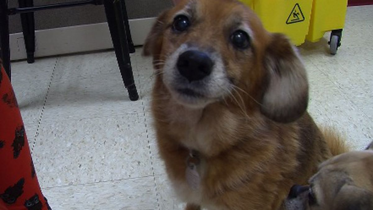 Cinnamon was adopted by one of the shelter workers.